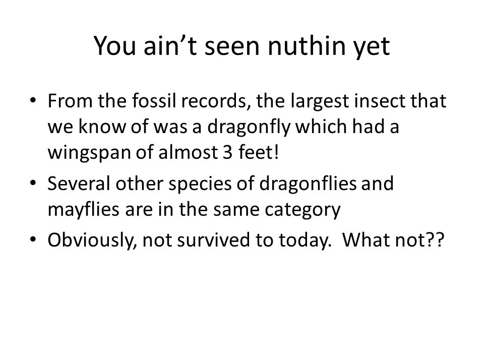 You ain't seen nuthin yet From the fossil records, the largest insect that we know of was a dragonfly which had a wingspan of almost 3 feet.