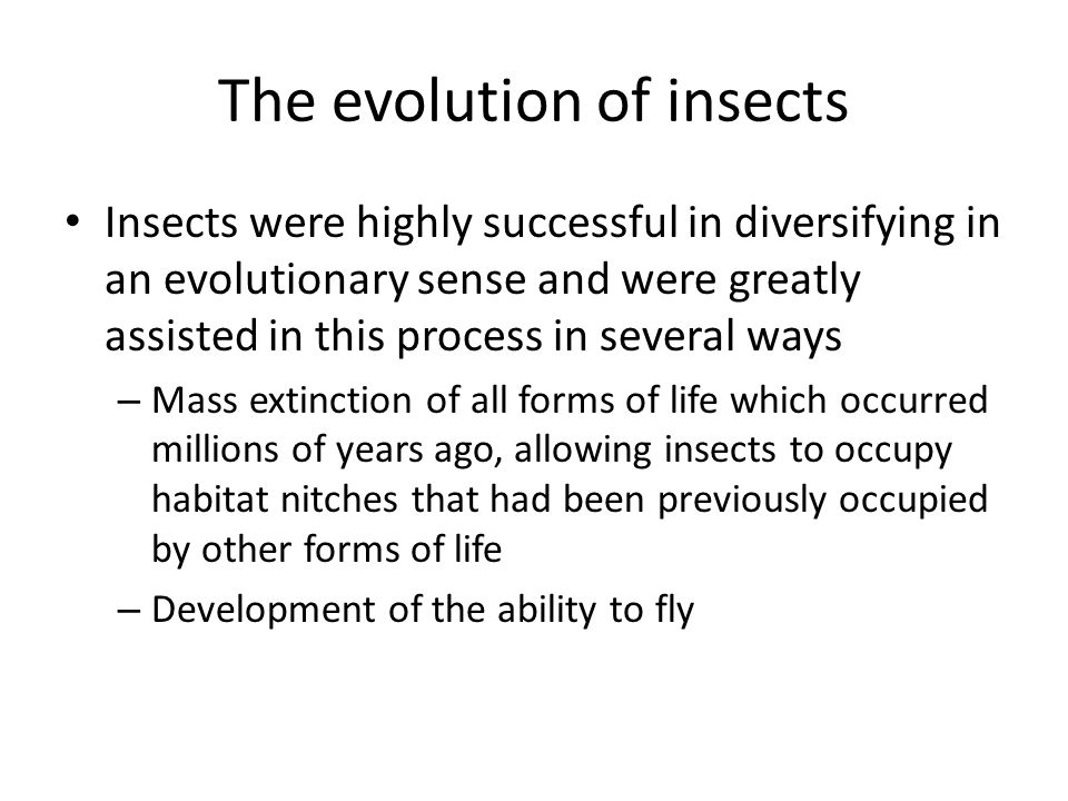 The evolution of insects Insects were highly successful in diversifying in an evolutionary sense and were greatly assisted in this process in several ways – Mass extinction of all forms of life which occurred millions of years ago, allowing insects to occupy habitat nitches that had been previously occupied by other forms of life – Development of the ability to fly
