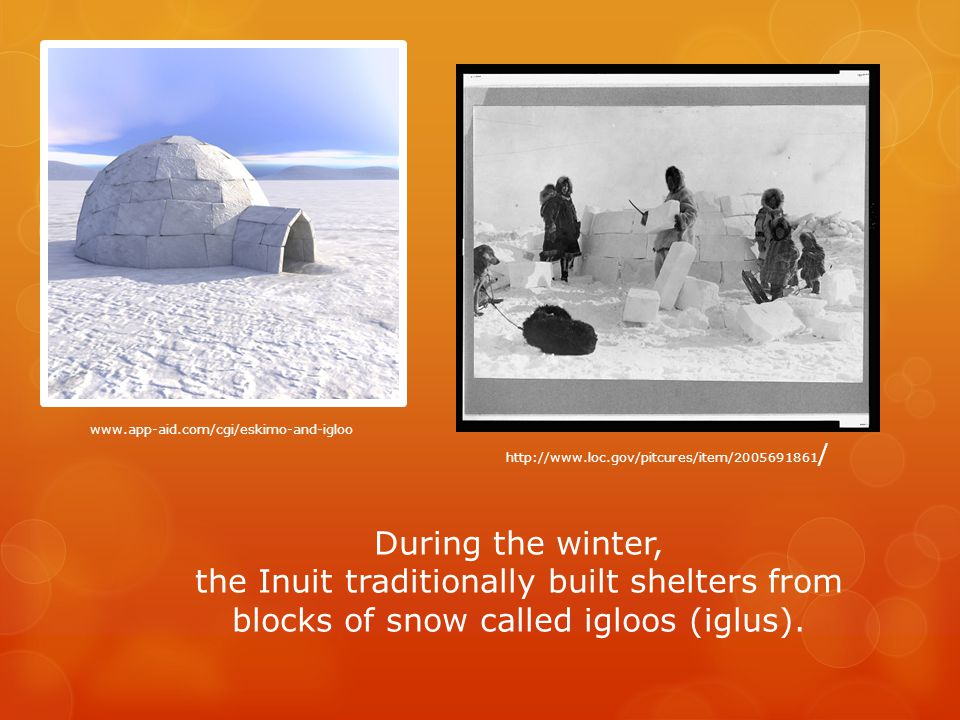 During the winter, the Inuit traditionally built shelters from blocks of snow called igloos (iglus).