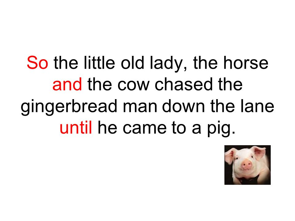 So the little old lady, the horse and the cow chased the gingerbread man down the lane until he came to a pig.
