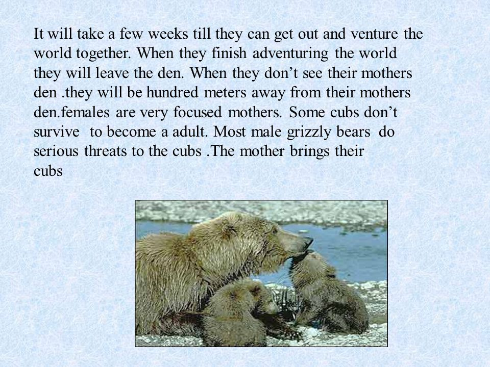Grizzly bears eat plants, berry s, and roots, and sprout, fungi,fish,insect, and small mammals.There cubs are as small as a rat.