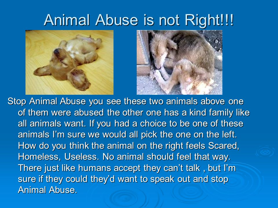 Animal Abuse is not Right!!.
