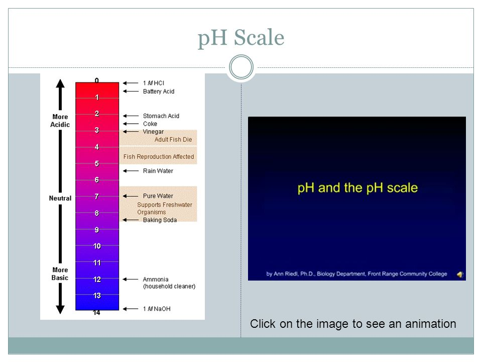 pH Scale Click on the image to see an animation