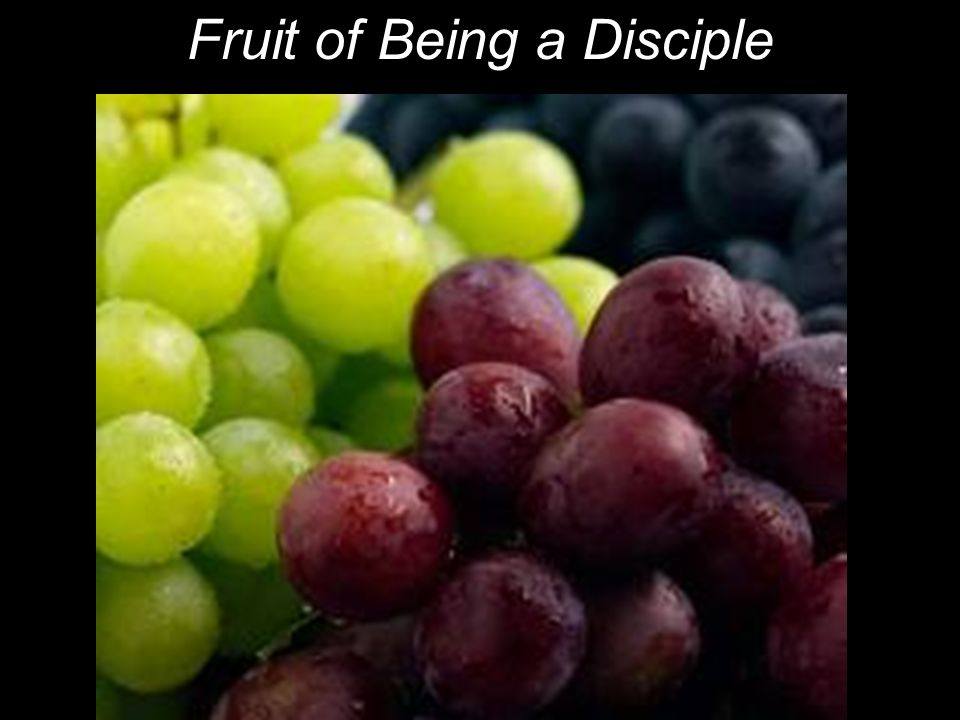 Fruit of Being a Disciple