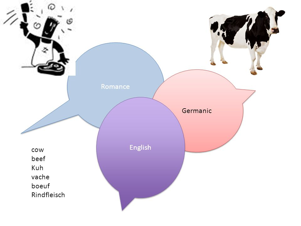 Romance Germanic English cow beef Kuh vache boeuf Rindfleisch