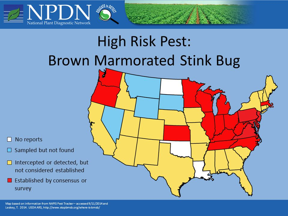 High Risk Pest: Brown Marmorated Stink Bug Map based on information from NAPIS Pest Tracker – accessed 9/11/2014 and Leskey, T.
