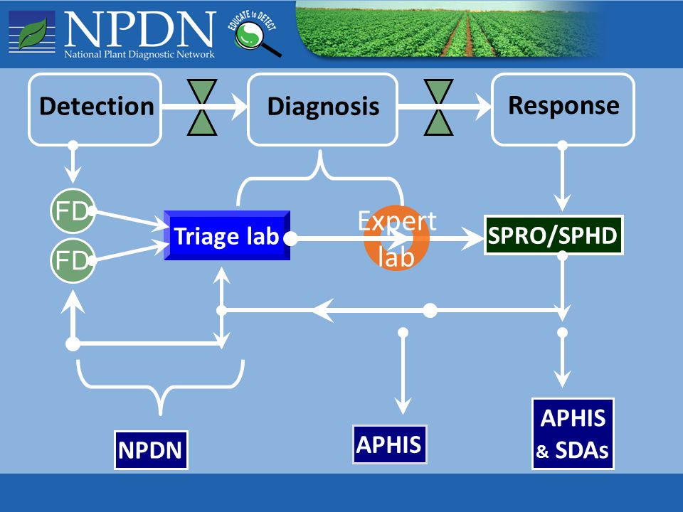 Diagnosis Response Detection Triage lab Expert lab NPDN APHIS & SDAs FD SPRO/SPHD