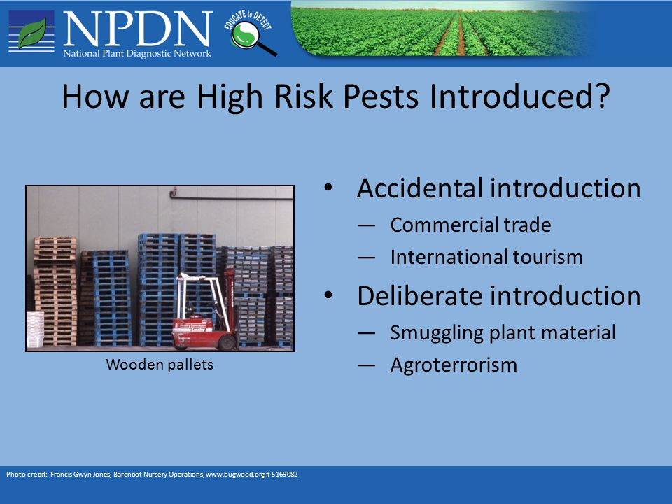 How are High Risk Pests Introduced.