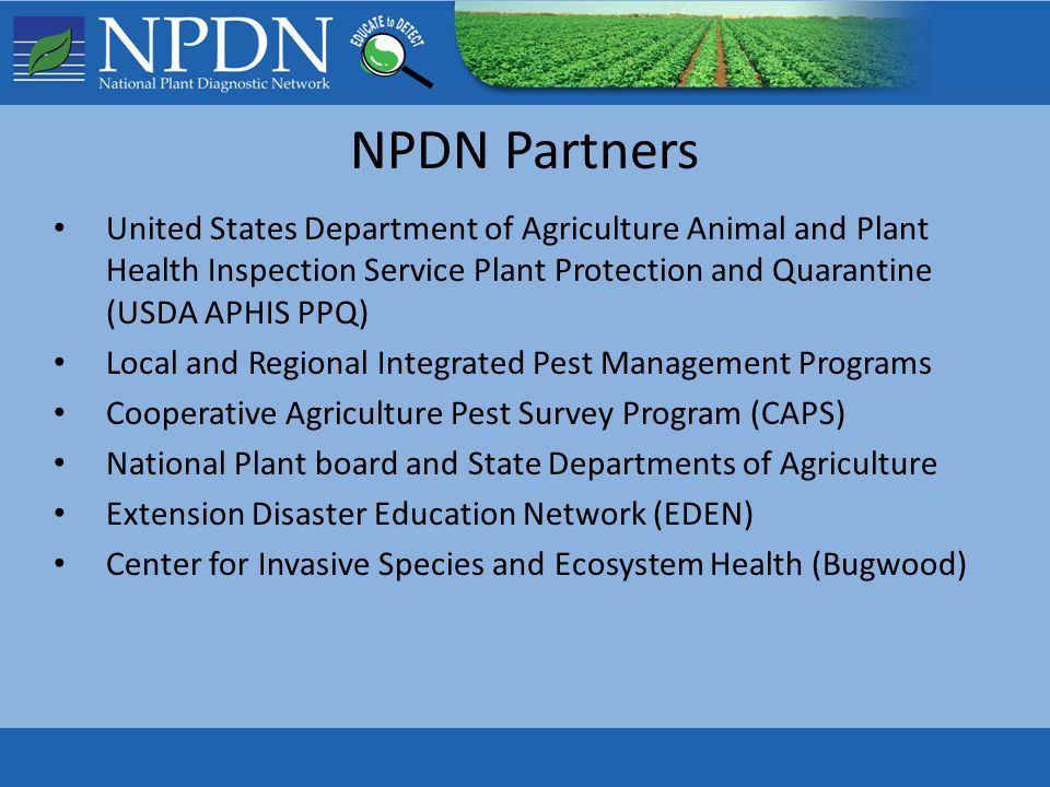 NPDN Partners United States Department of Agriculture Animal and Plant Health Inspection Service Plant Protection and Quarantine (USDA APHIS PPQ) Local and Regional Integrated Pest Management Programs Cooperative Agriculture Pest Survey Program (CAPS) National Plant board and State Departments of Agriculture Extension Disaster Education Network (EDEN) Center for Invasive Species and Ecosystem Health (Bugwood)