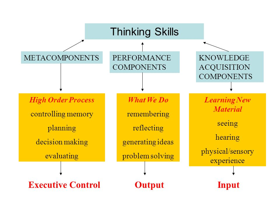 Thinking Skills METACOMPONENTSPERFORMANCE COMPONENTS KNOWLEDGE ACQUISITION COMPONENTS High Order Process controlling memory planning decision making evaluating What We Do remembering reflecting generating ideas problem solving Learning New Material seeing hearing physical/sensory experience Executive ControlOutputInput