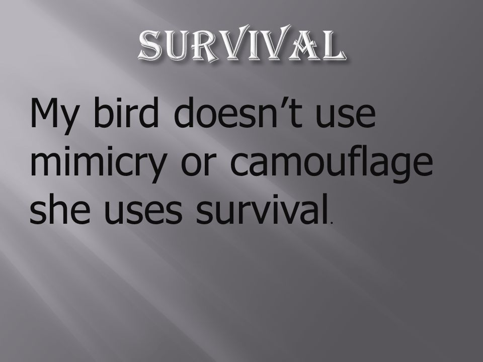 My bird doesn't use mimicry or camouflage she uses survival.