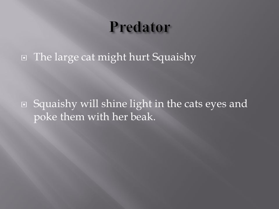  The large cat might hurt Squaishy  Squaishy will shine light in the cats eyes and poke them with her beak.