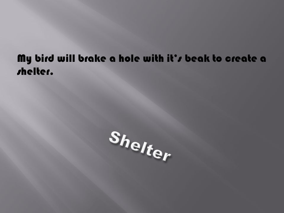 My bird will brake a hole with it's beak to create a shelter.