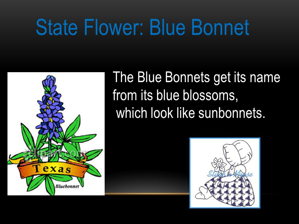 State Flower: Blue Bonnet The Blue Bonnets get its name from its blue blossoms, which look like sunbonnets.