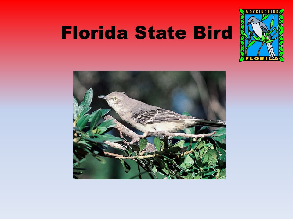 Florida State Symbols Florida State Flag Florida State Animal