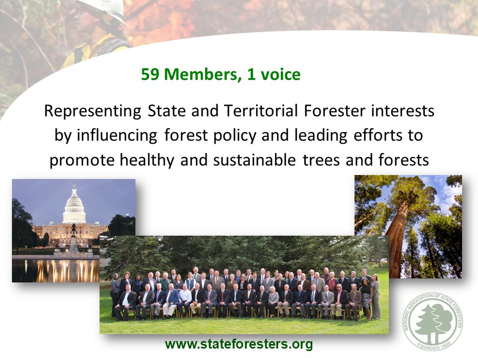 59 Members, 1 voice Representing State and Territorial Forester interests by influencing forest policy and leading efforts to promote healthy and sustainable trees and forests www.stateforesters.org
