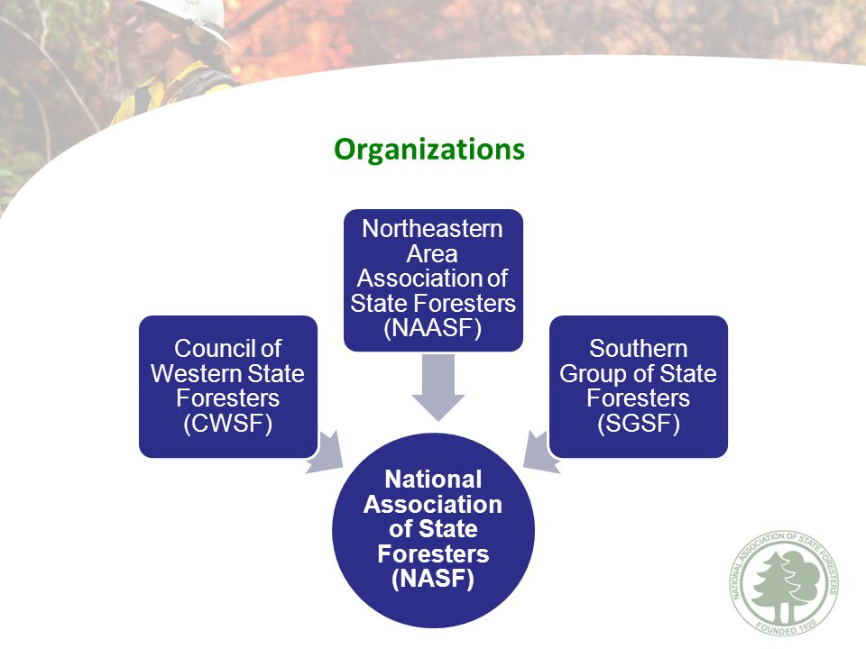 National Association of State Foresters (NASF) Council of Western State Foresters (CWSF) Northeastern Area Association of State Foresters (NAASF) Southern Group of State Foresters (SGSF) Organizations