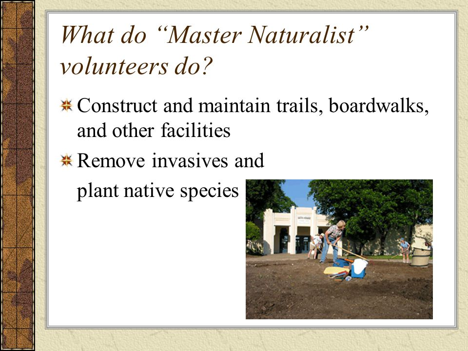 What do Master Naturalist volunteers do.