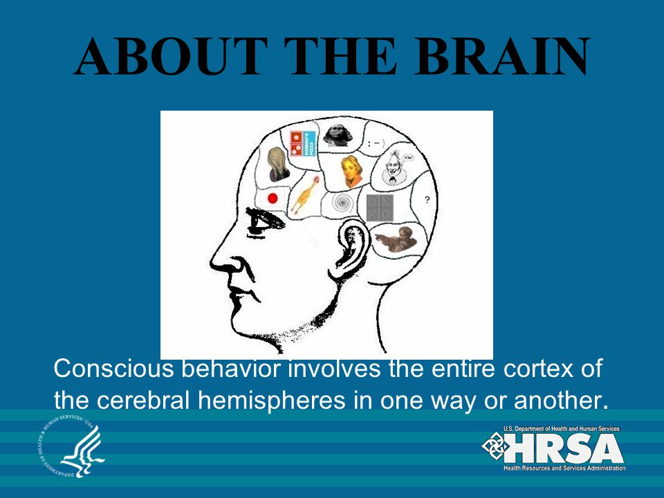 ABOUT THE BRAIN Conscious behavior involves the entire cortex of the cerebral hemispheres in one way or another.