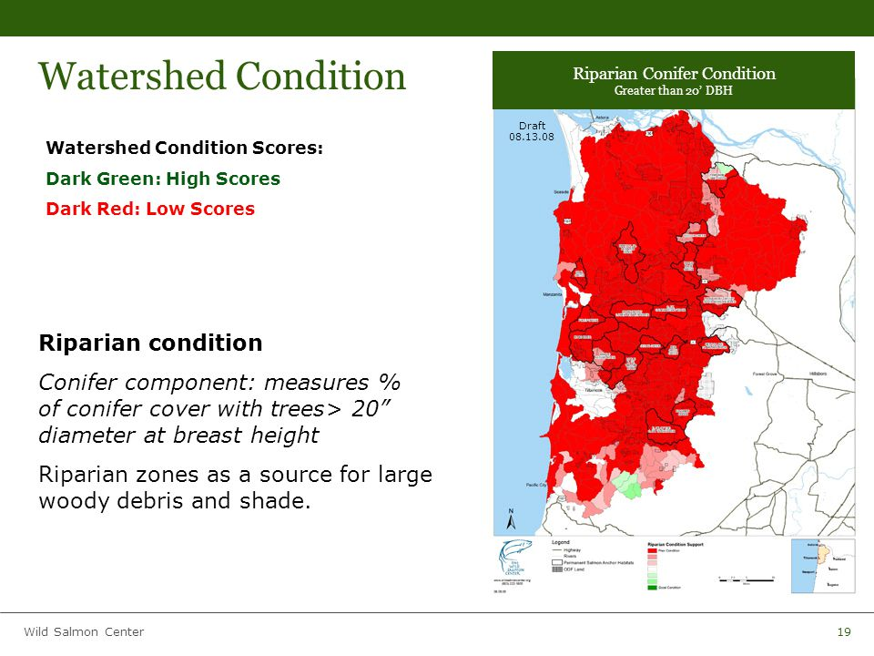 Wild Salmon Center19 Watershed Condition Watershed Condition Scores: Dark Green: High Scores Dark Red: Low Scores Riparian condition Conifer component: measures % of conifer cover with trees> 20 diameter at breast height Riparian zones as a source for large woody debris and shade.
