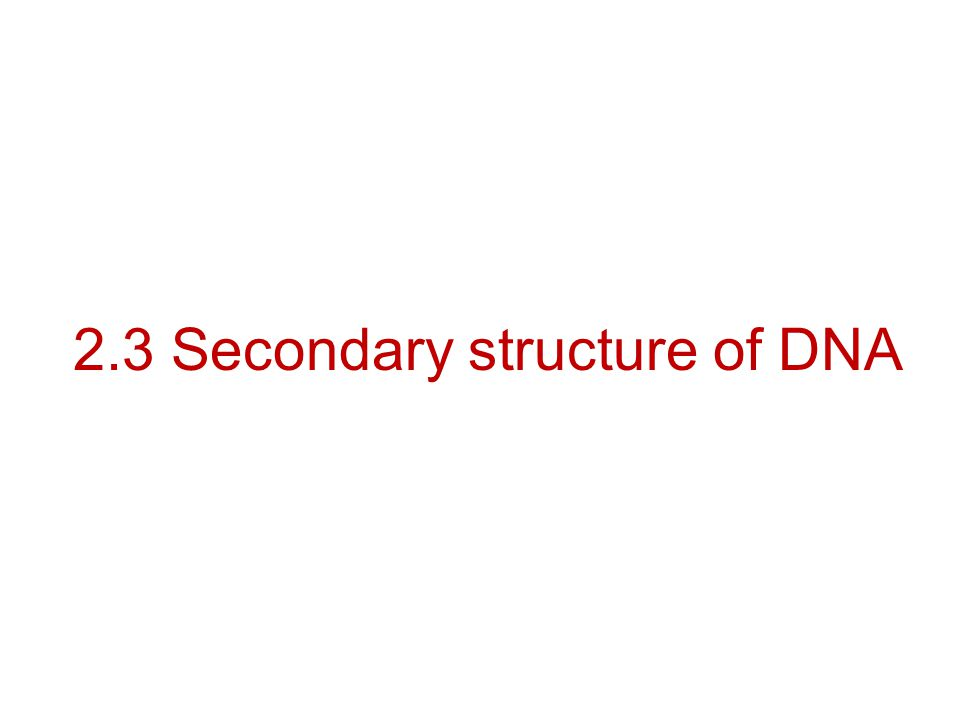 2.3 Secondary structure of DNA