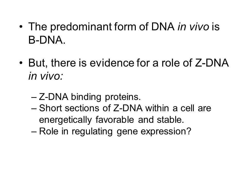 The predominant form of DNA in vivo is B-DNA.