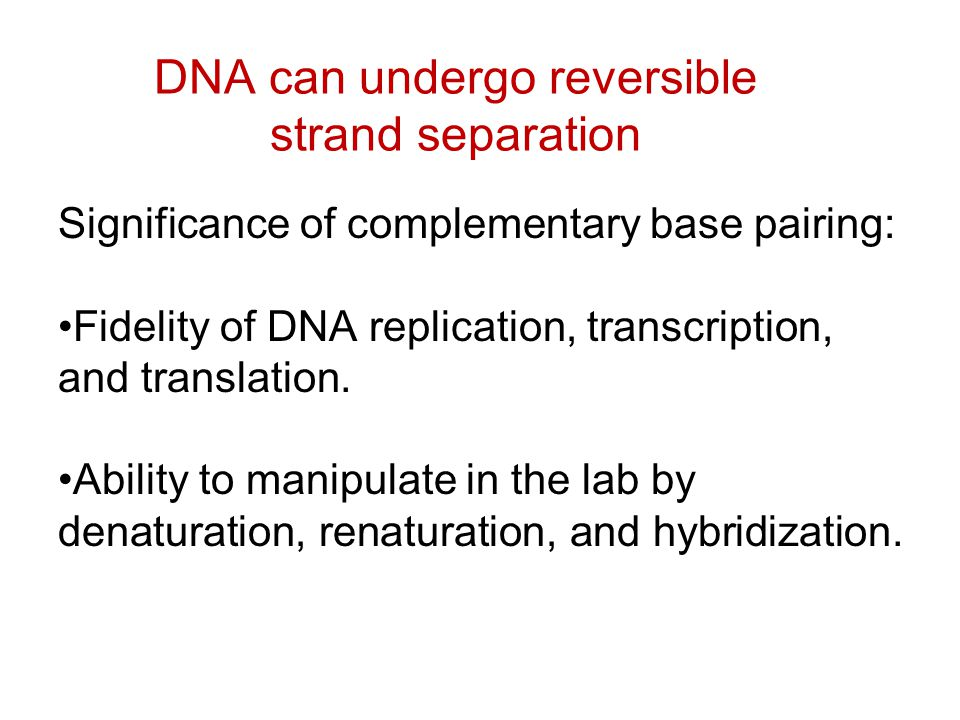 DNA can undergo reversible strand separation Significance of complementary base pairing: Fidelity of DNA replication, transcription, and translation.