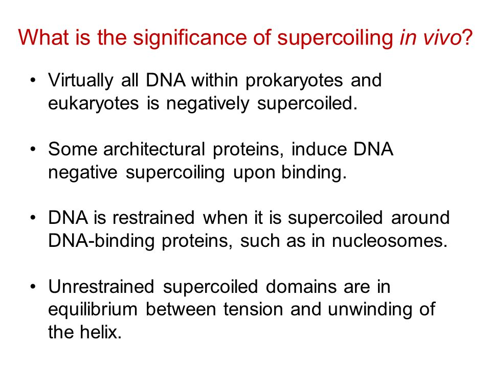 What is the significance of supercoiling in vivo.