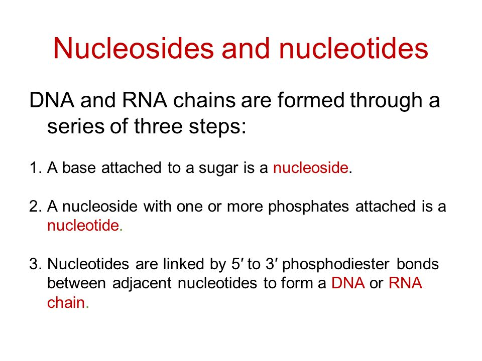 Nucleosides and nucleotides DNA and RNA chains are formed through a series of three steps: 1.A base attached to a sugar is a nucleoside.