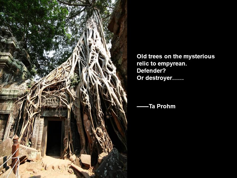 Old trees on the mysterious relic to empyrean. Defender Or destroyer…… ——Ta Prohm