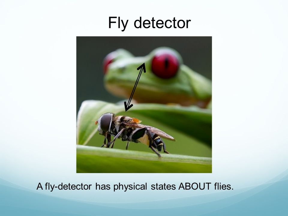 Fly detector A fly-detector has physical states ABOUT flies.