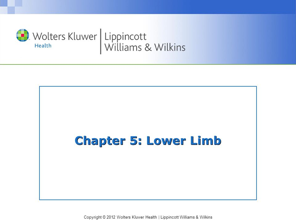 Copyright © 2012 Wolters Kluwer Health | Lippincott Williams & Wilkins Chapter 5: Lower Limb