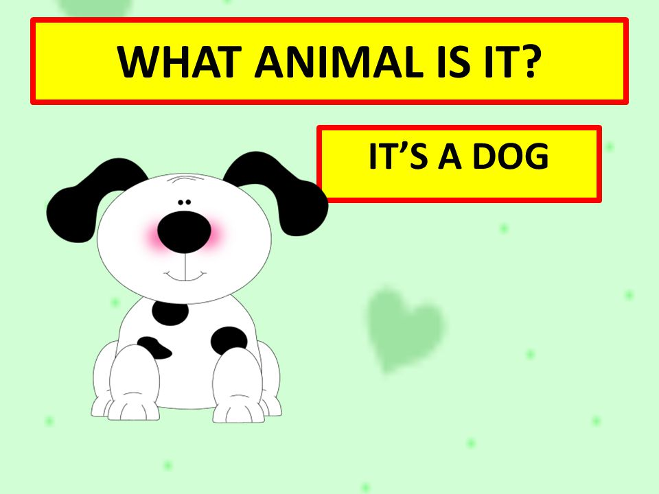 WHAT ANIMAL IS IT IT'S A DOG