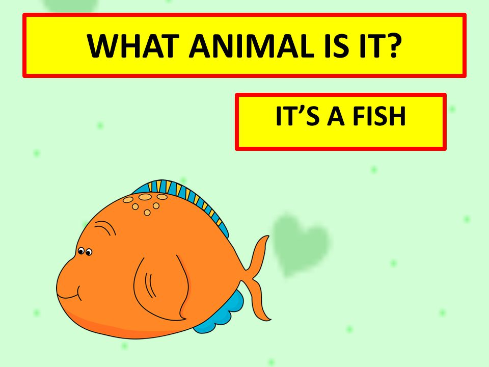 WHAT ANIMAL IS IT IT'S A FISH
