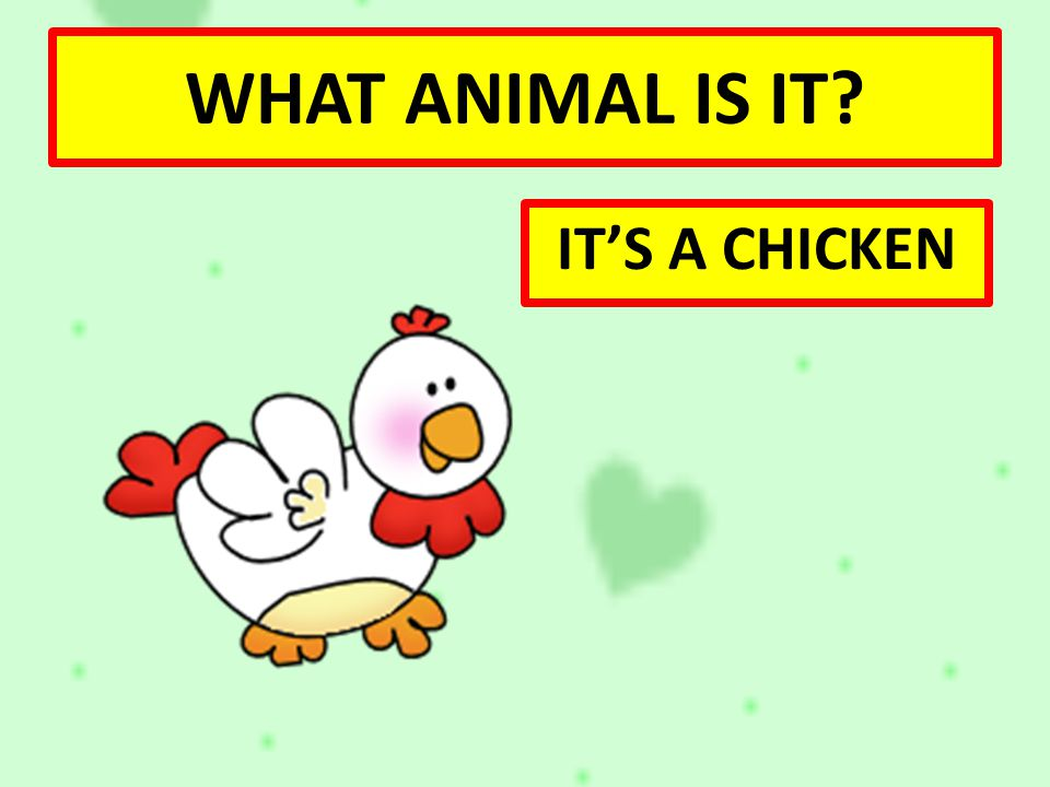 WHAT ANIMAL IS IT IT'S A CHICKEN