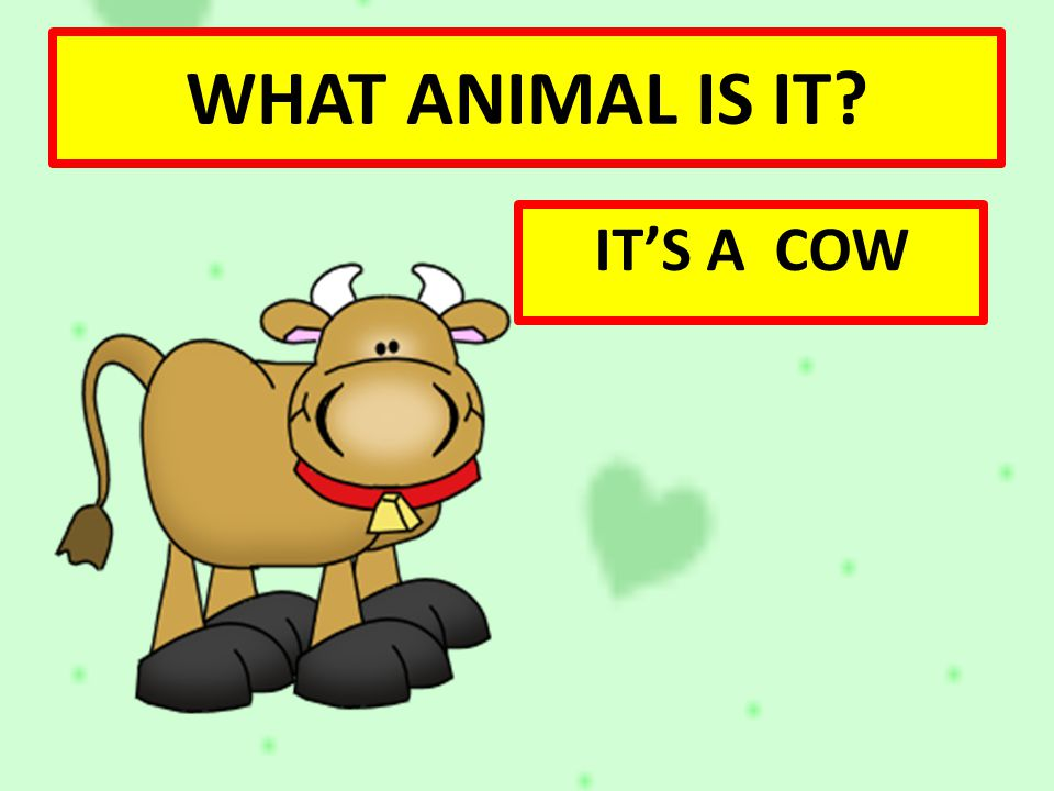 WHAT ANIMAL IS IT IT'S A COW
