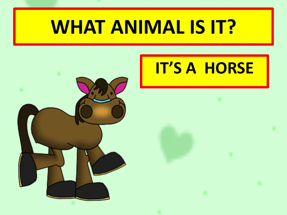 WHAT ANIMAL IS IT IT'S A HORSE