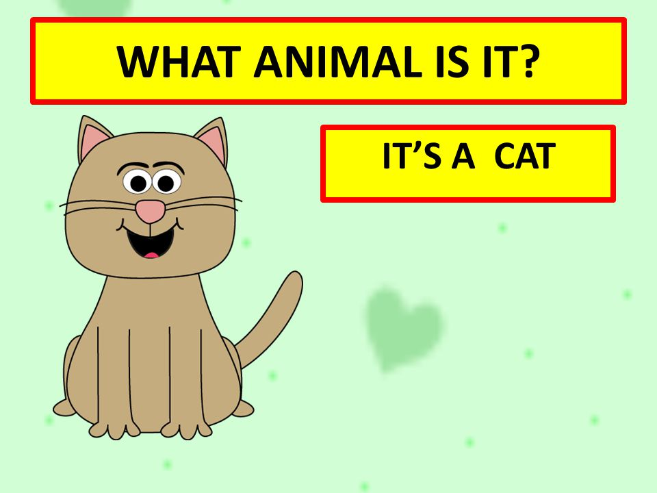 WHAT ANIMAL IS IT IT'S A CAT