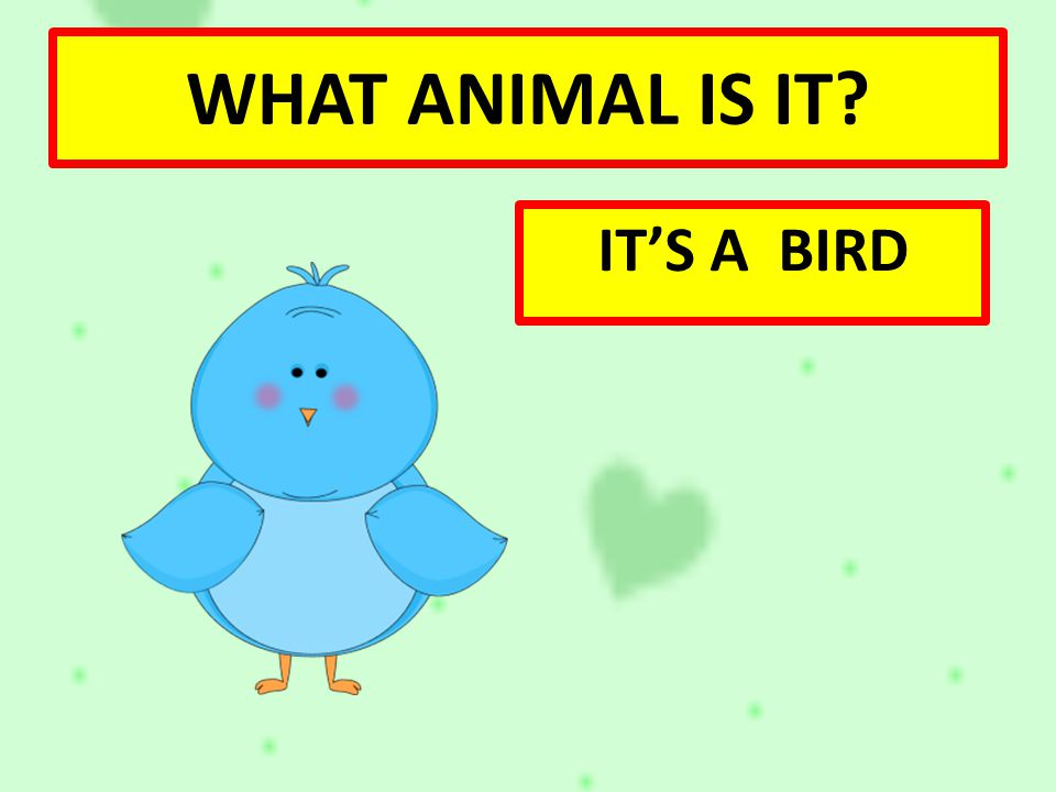 WHAT ANIMAL IS IT IT'S A BIRD