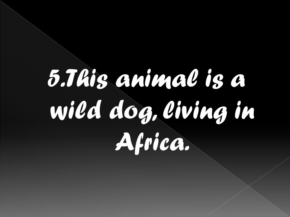 5.This animal is a wild dog, living in Africa.
