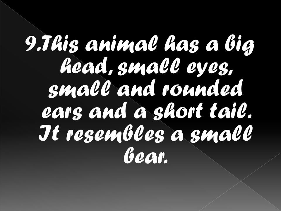9.This animal has a big head, small eyes, small and rounded ears and a short tail.