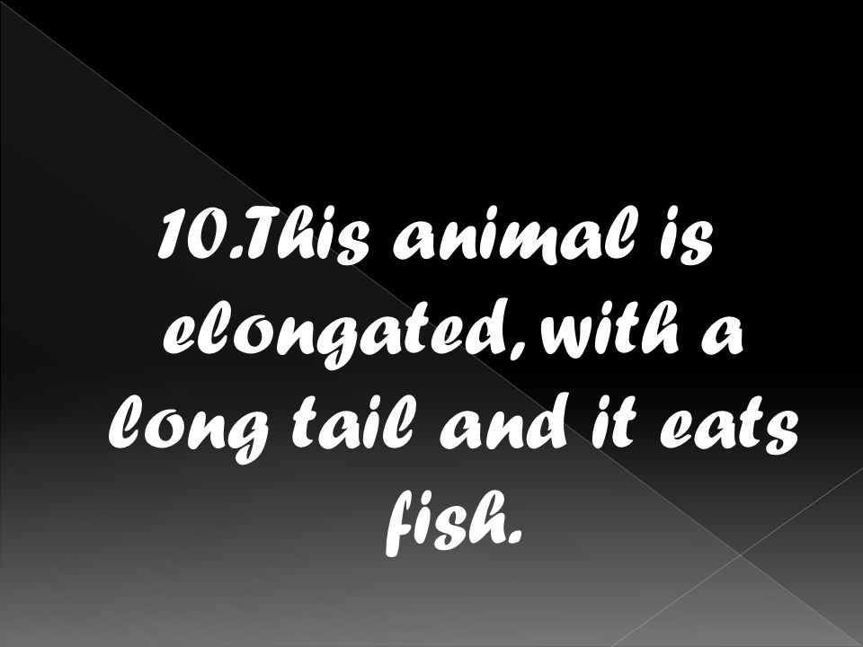 10.This animal is elongated, with a long tail and it eats fish.