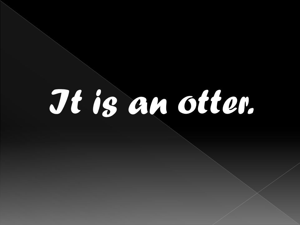 It is an otter.