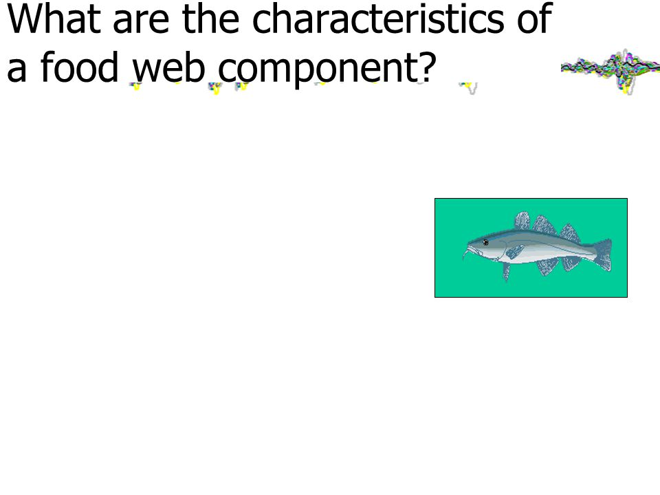 What are the characteristics of a food web component