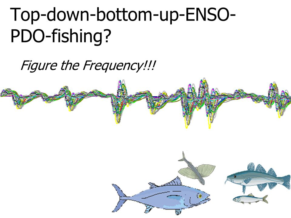 Top-down-bottom-up-ENSO- PDO-fishing Figure the Frequency!!!