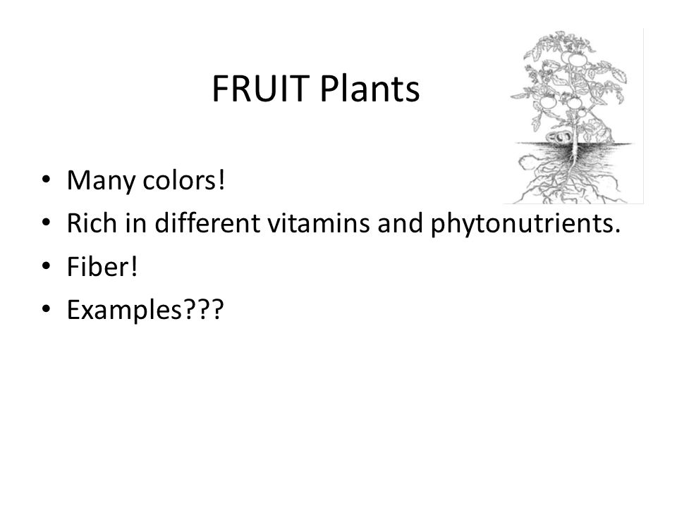 FRUIT Plants Many colors! Rich in different vitamins and phytonutrients. Fiber! Examples