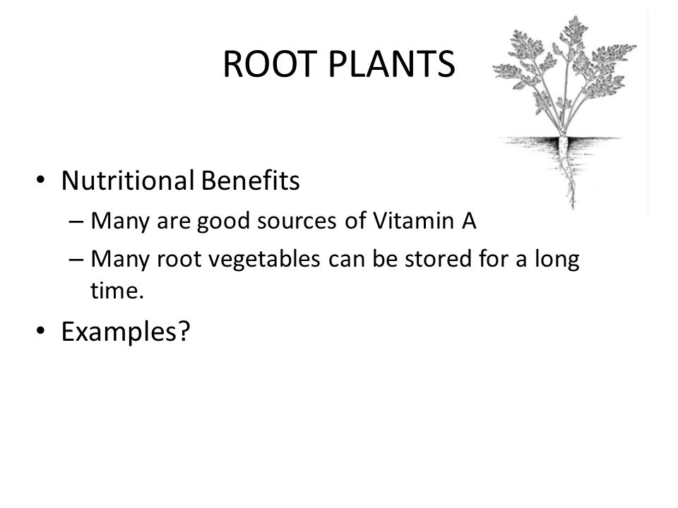 ROOT PLANTS Nutritional Benefits – Many are good sources of Vitamin A – Many root vegetables can be stored for a long time.