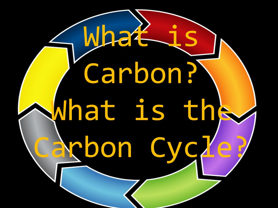 What is Carbon What is the Carbon Cycle
