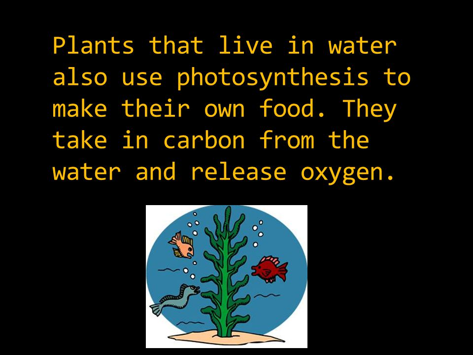 Plants that live in water also use photosynthesis to make their own food.