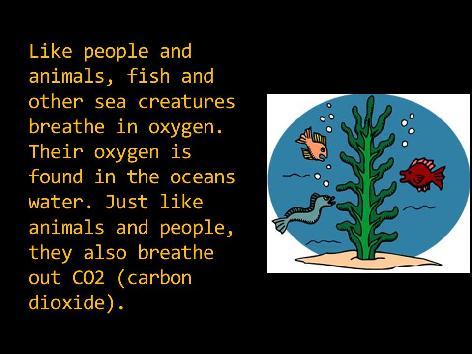 Like people and animals, fish and other sea creatures breathe in oxygen.